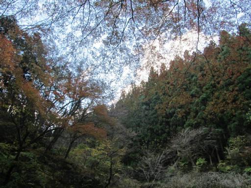 20111126・神戸岩08