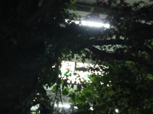 20111126・御嶽08