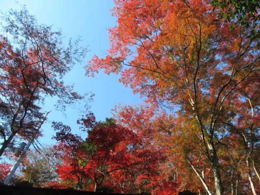 20111123・空01・東郷公園