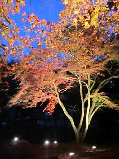 20111123・空13・長瀞
