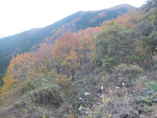 20111126・空17・鋸山林道