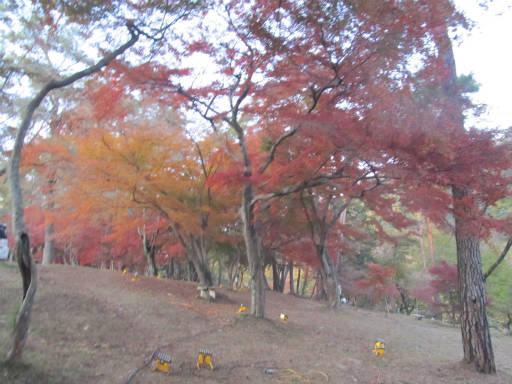 20111123・長瀞1-24~25