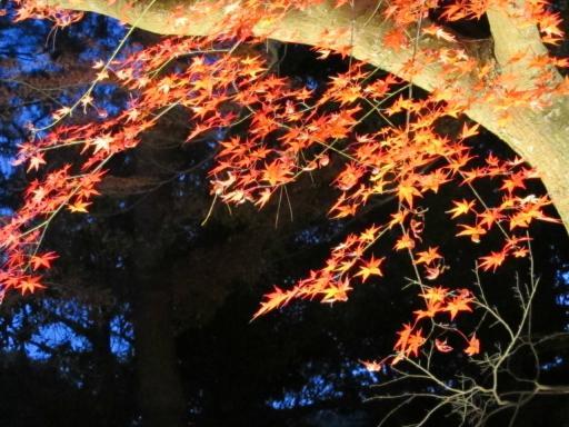 20111123・紅葉08・長瀞