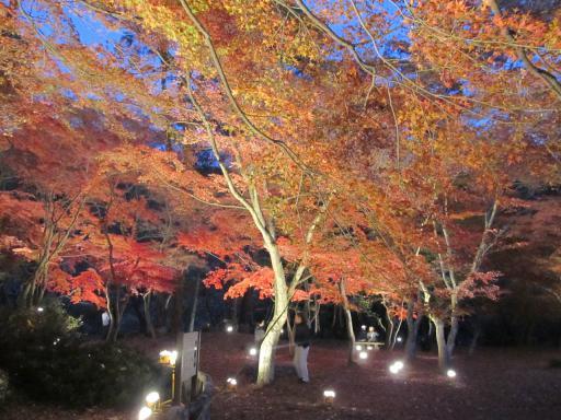 20111123・紅葉07・長瀞