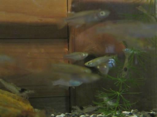 20111204・自然観察会1-04