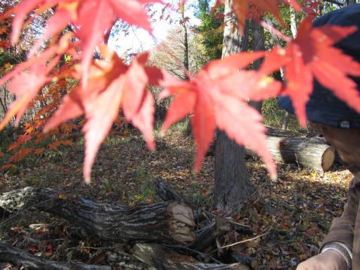 20111204・自然観察会2-10