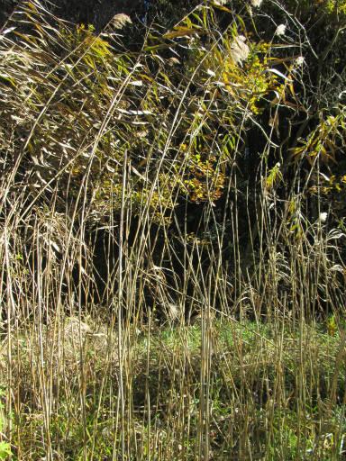 20111204・自然観察会2-14
