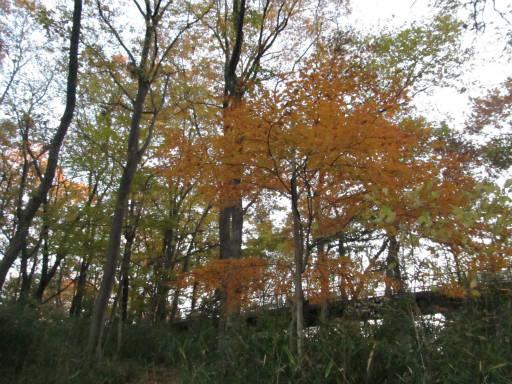 20111211・浅間山03