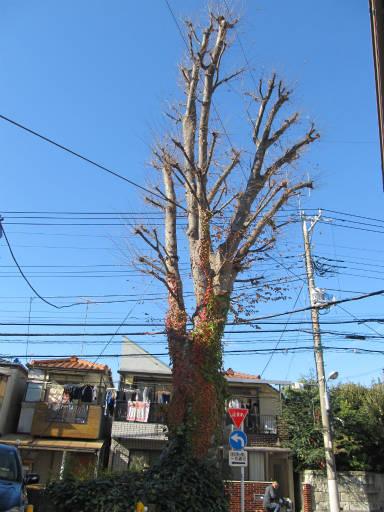 20111218・中野めぐり2-12