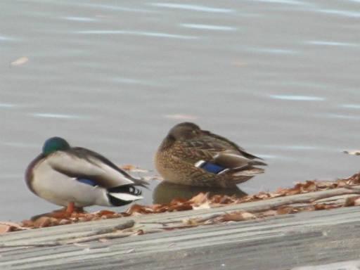 canada goose k鰌 online
