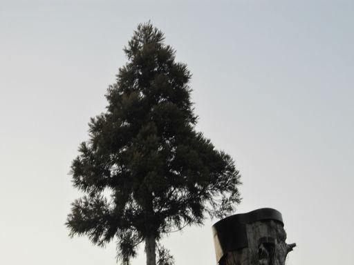 20111229・荒幡富士23