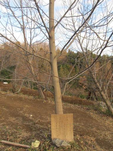 20120114・狭山湖1-08