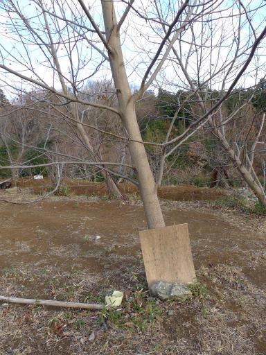 20120114・狭山湖2-08