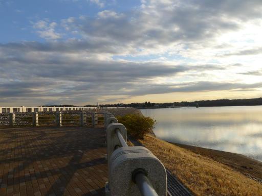 20120114・狭山湖2-11