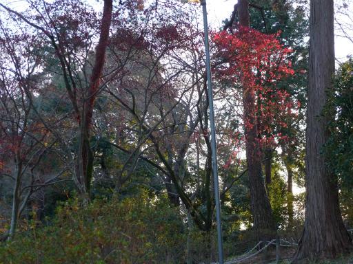 20120114・天覧山24-1