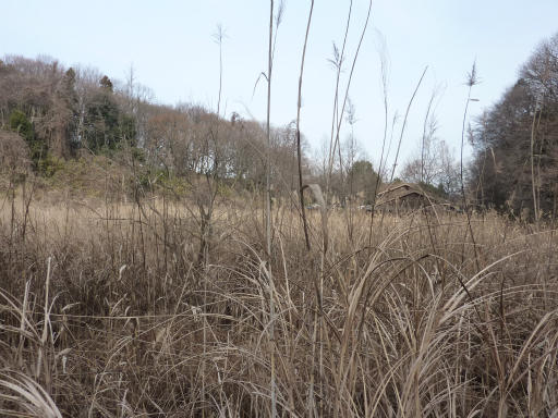 20120115・自然観察会04-3