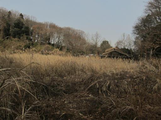 20120115・自然観察会04-2