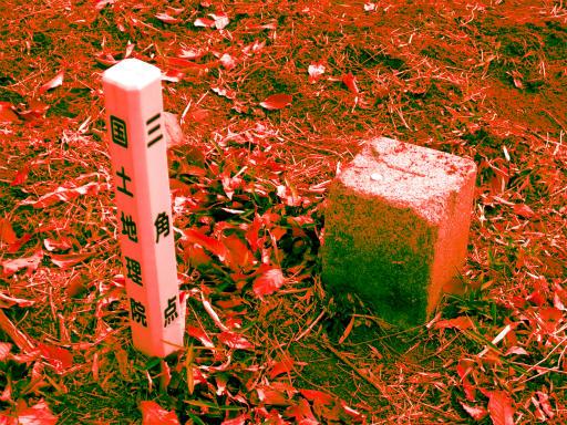20120115・自然観察会RAW02b