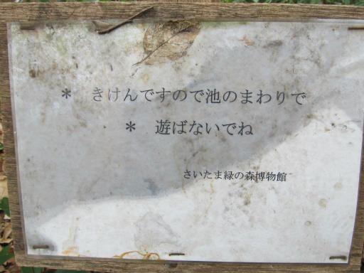 20120115・自然観察会20-2