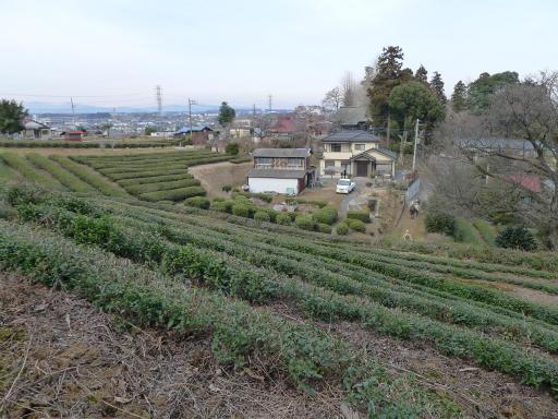 20120115・自然観察会29-1