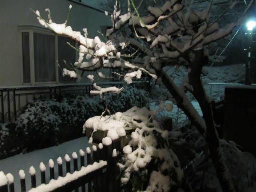 20120123・ドカ雪03