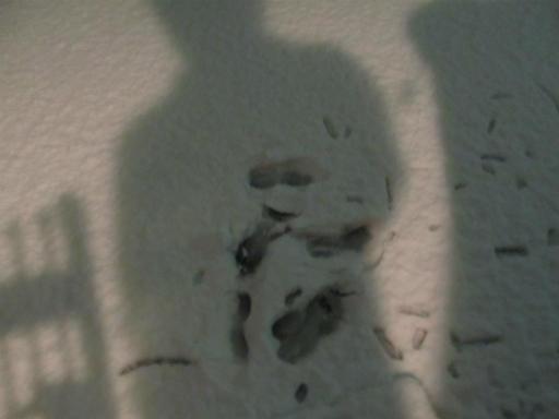 20120123・ドカ雪05