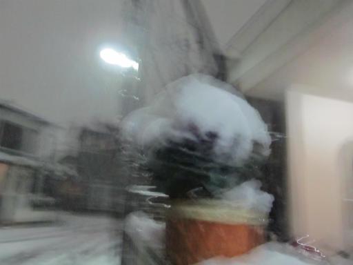 20120123・ドカ雪12