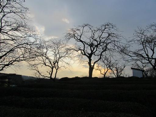 20120122・狭山湖散歩03