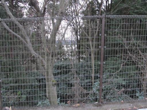 20120122・狭山湖散歩20