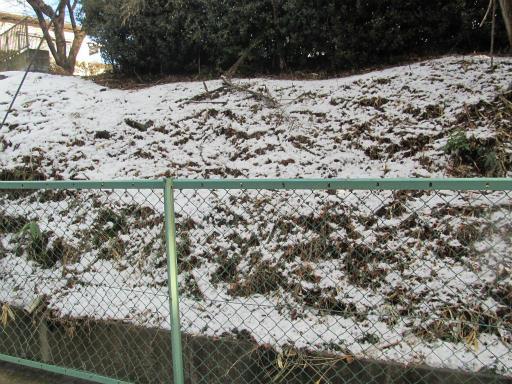 201201125・雪トトロ01P