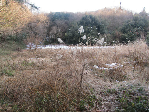 201201125・雪トトロ07P