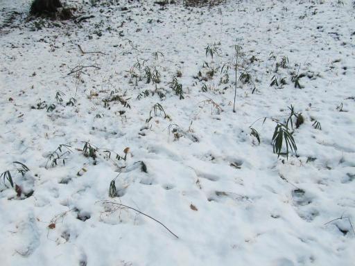 201201125・雪トトロ17P
