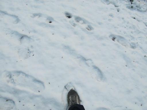 201201125・雪トトロ16P