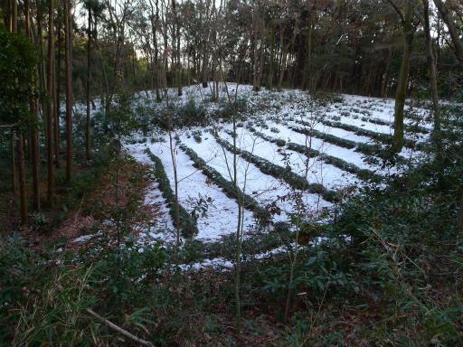 201201125・雪トトロ20L