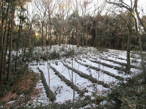 201201125・雪トトロ20P