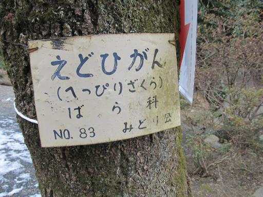 20120127・宝登山2-04P