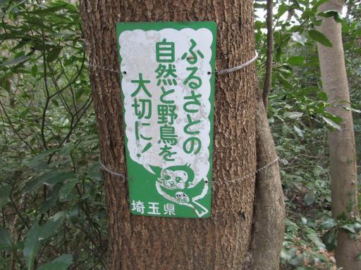 20120127・宝登山ネオン5