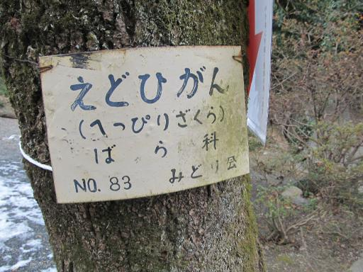 20120127・宝登山ネオン4