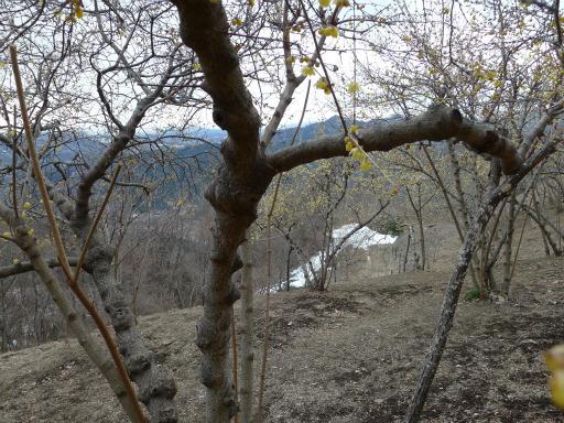 20120127・宝登山3-09L