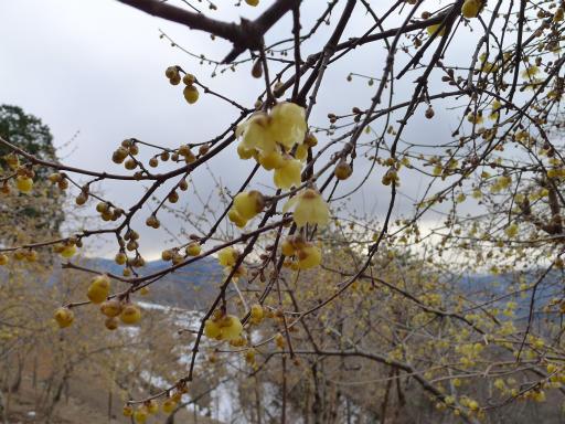 20120127・宝登山3-11L