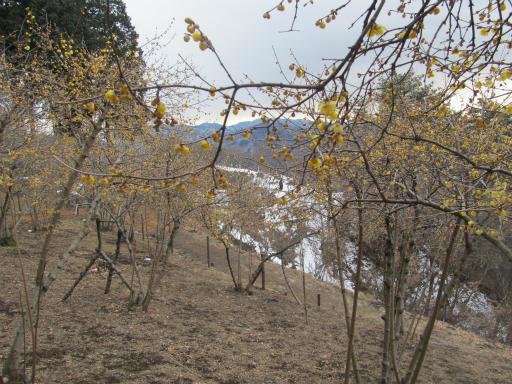 20120127・宝登山3-10P