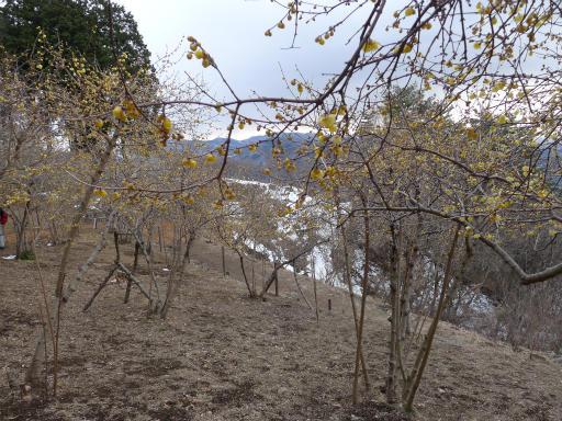 20120127・宝登山3-10L