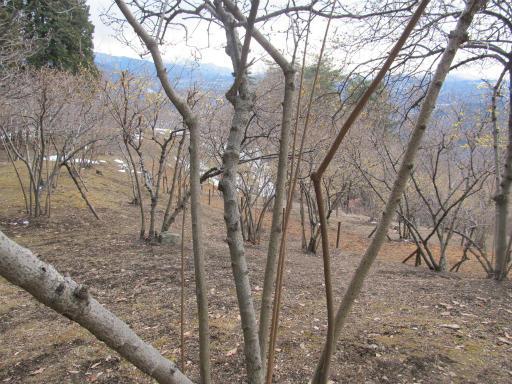 20120127・宝登山3-17P