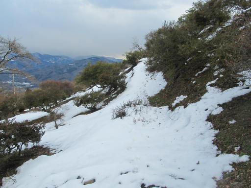 20120127・宝登山4-15P