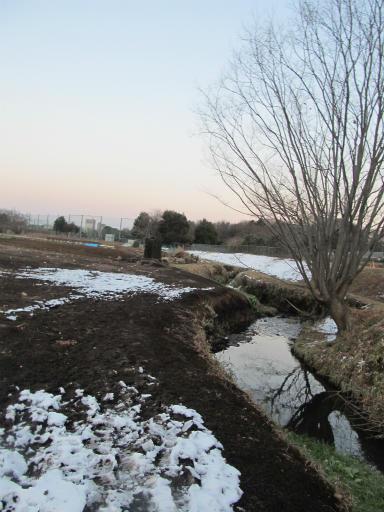 20120128・雪の所沢21