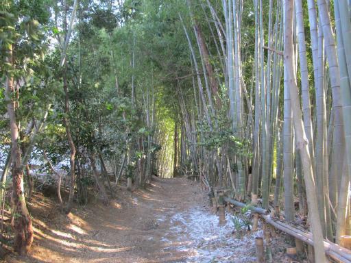 20120129・所沢散歩1-05