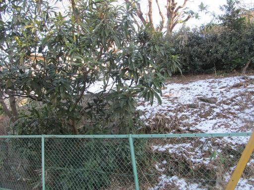 20120129・所沢散歩1-01