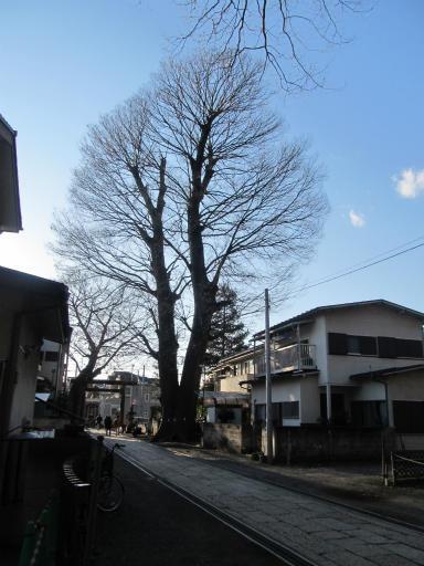 20120129・所沢散歩2-27