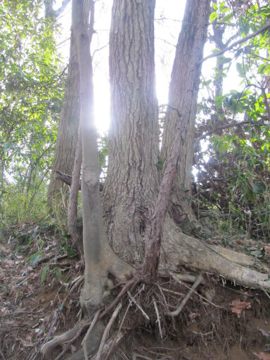 20120205・緑の森01
