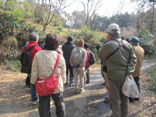 20120205・緑の森12
